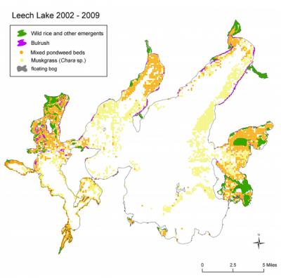 Leech Lake vegetation map