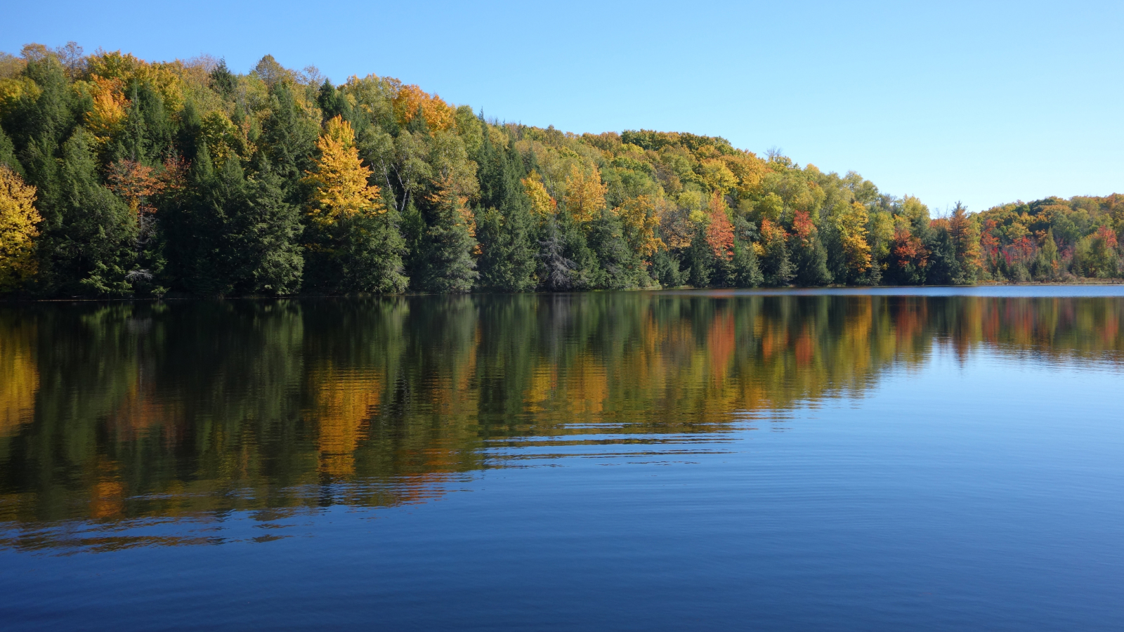Background image of trees and a lake in the fall