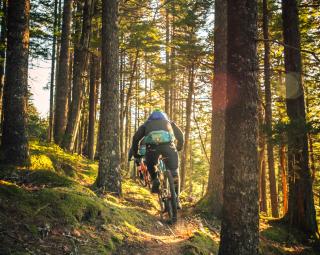 mountain biking trail in woods