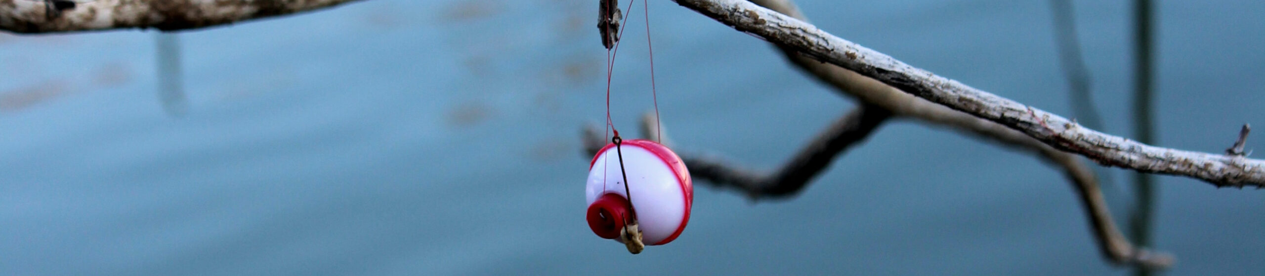 Fishing Lure Hanging on Branch